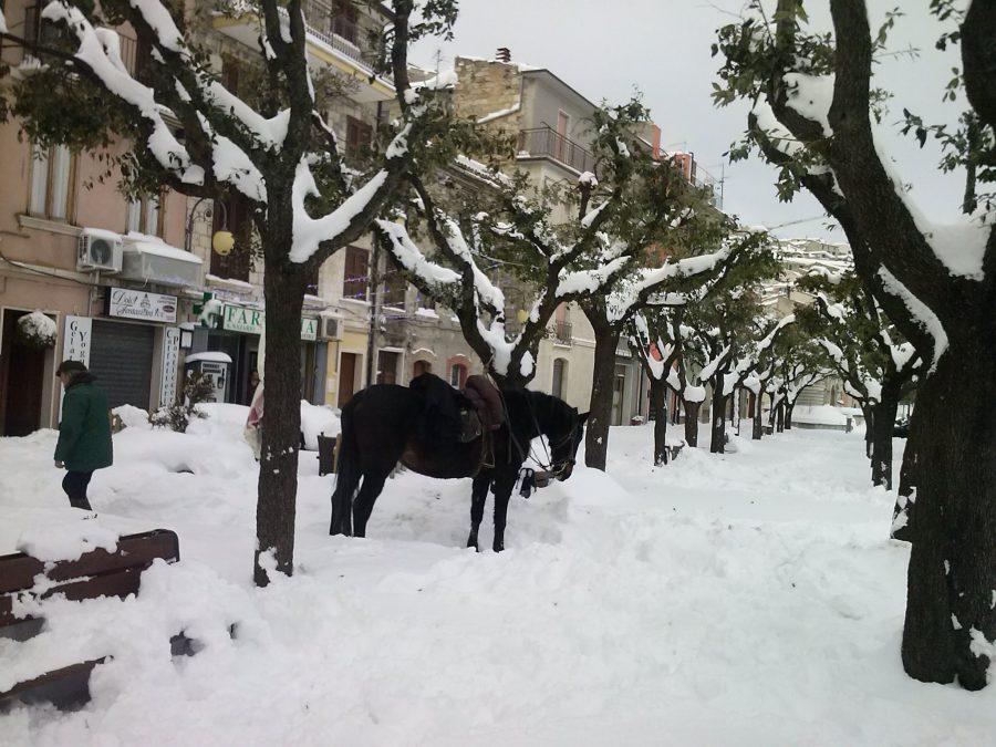 Trivento pubblicato l avviso per i danni da neve alle for Subito it molise attrezzature agricole